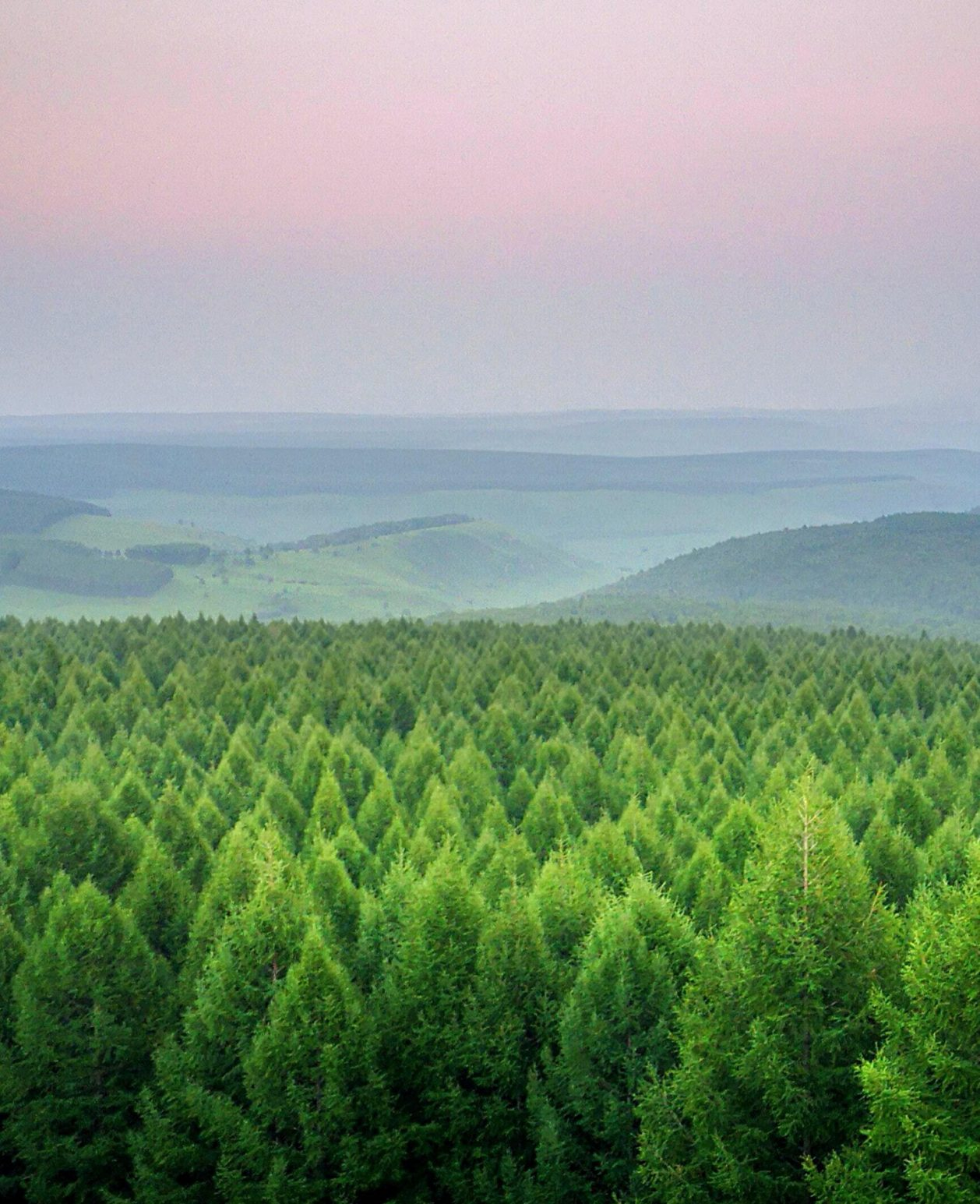 Forest sustainability