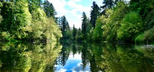 lake surrounded by treas